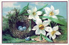 Royalty-Free-Image-Nest-Eggs-GraphicsFairy.jpg 1,600×1,033 pixels