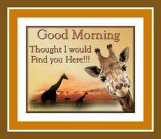 Giraffes!!!