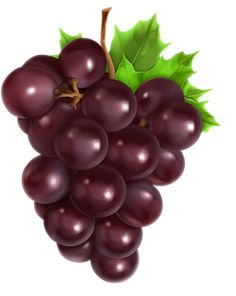 Find Bunch Grapes Vector Illustration stock images in HD and millions of other royalty-free stock photos, illustrations and vectors in the Shutterstock collection. Thousands of new, high-quality pictures added every day. Fruit And Veg, Fresh Fruit, Fruits And Vegetables, Food Clips, Fruit Painting, Color Pencil Art, Fruit Art, Botanical Art, Belle Photo