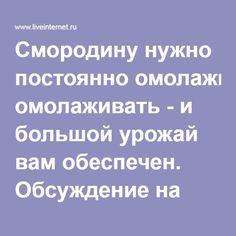 Смородину нужно постоянно омолаживать - и большой урожай вам обеспечен. Обсуждение на LiveInternet - Российский Сервис Онлайн-Дневников