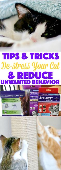tips and tricks to de stress your cat and reduce unwanted behavior like scratching