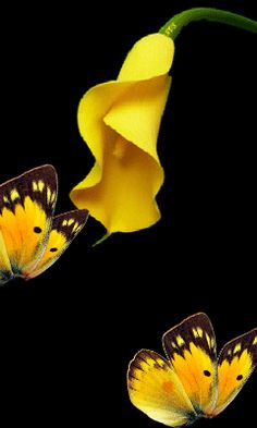 Beautiful view flowers an butterfly - Salvabrani Beautiful Flowers Wallpapers, Beautiful Rose Flowers, Beautiful Nature Wallpaper, Beautiful Gif, Beautiful Butterflies, Butterfly Gif, Butterfly Pictures, Butterfly Wallpaper, Foto Gif