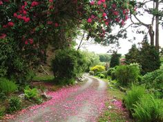 The driveway through the garden into Farchynys Hall, manor house with self catering in Snowdonia. Catering Halls, Snowdonia National Park, North Wales, Hydrangea, Garden Ideas, National Parks, Country Roads, Building, Plants