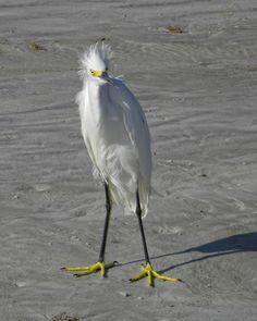 We've all had a bad hair day Birds in Palm Coast, Flagler Beach, Florida