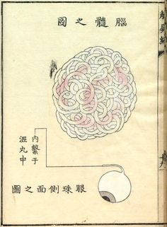 1st Japanese dissection to examine the human brain (1772); Source: Nihon Iryō Bunkashi (History of Japanese Medical Culture)