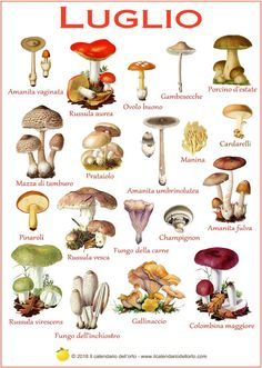 Many people don't realize that mushroom growing is something that can be done right in their own greenhouse. And since mushrooms are such a wonderful food, this can be a superb addition to one's diet. Poisonous Mushrooms, Wild Mushrooms, Stuffed Mushrooms, Mushroom Art, Mushroom Fungi, Healthy Prepared Meals, Healthy Recipes, Lemon Skin Lightener, Slime Mould