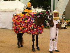 Horse Fancy Dress Costume, Flower Costume, Horse Halloween Costumes, Animal Costumes, Costumes For Horses, Funny Costumes, Halloween Crafts, Horse Show Mom, Show Horses