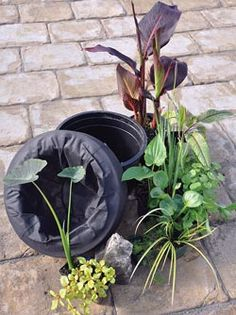 Clever floating rings for lilies, etc. diy floating islands for pond plants using a pool noodle and landscape fabric