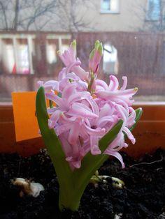 Nadeszła wiosna -na naszych oknach także!