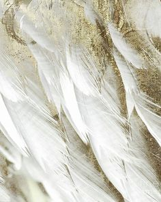 Angel Aesthetic, Gold Aesthetic, And So It Begins, Thing 1, White Feathers, Character Aesthetic, All Poster, Posters, Picture Wall