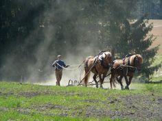 Hieman peltotilaa, josta ruokaa eläimille ja ihmisille. Hommat tehdään lihas- ja hevosvoimin.