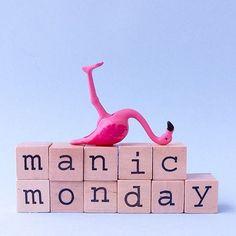 Hoping that your Monday is more mild than manic Flamingo Decor, Pink Flamingos, Flamingo Gifts, Flamingo Illustration, Manic Monday, Pink Quotes, Pink Bird, Good Morning Good Night, Having A Bad Day