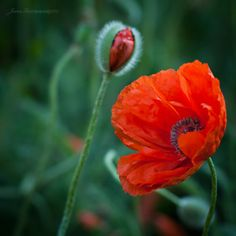 Beautiful Nature - Flowers by *BabyJoan. S)