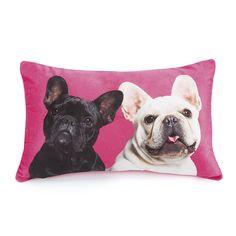 Catseye, Mr & Mrs Cushion. - Cat and Dog Crazy