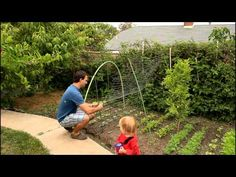 Easy and Simple Cucumber Trellis for Vertical Growing by the California Gardener