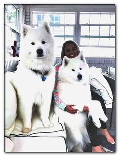 dog breeds available in india with price Samoyed Dogs, Pet Dogs, Dog Cat, Doggies, Dog Breeds List, Cute Dogs Breeds, Puppy Breeds, Cute Baby Dogs, Cute Dogs And Puppies