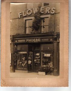 During the early part of the 1900s, a lady called Phoebe started a small floristry business in Catford. From a small shop in Sangley Road, Phoebe built up her business selling cut flowers and plants and, of course, making up flower arrangements for gifts and funerals. The business thrived and in 1947, Phoebe and her husband, Ernest, bought a piece of land in Penerley Road, Catford. On this land they grew chrysanthemums and dahlias for the florist shop as well as to supply the cut flower…