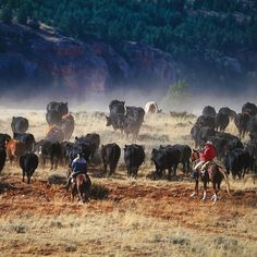 """""""Free and noble are thy workings and thy ways."""" - Wyoming State Song"""