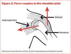 Supraspinatus: Anatomy and Biomechanics - HealthnPhysio Rotator Cuff Strengthening, Sports Therapy, Shoulder Joint, Scapula, Shoulder Injuries, Major Muscles, Palm, Study, Exercise