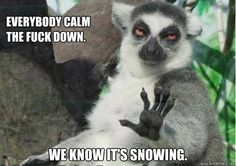 everybody calm the fuck down. we know it's snowing.