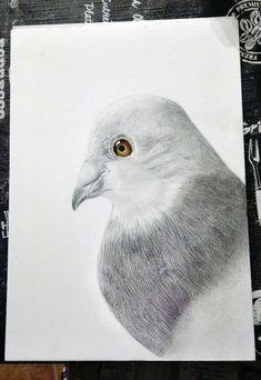 matite colorate su carta canson + markers Bird, Animals, Animaux, Birds, Animal, Animales, Animais