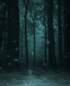 Fae Lights in Enchanted Forest - - Mystical Forest, Fantasy Forest, Magic Forest, Dark Forest, Dark Fantasy, Natur Wallpaper, Forest Wallpaper, Enchanted, Types Of Fairies