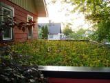 Roof garden on carport roof