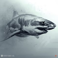 Great white shark on is part of Great White Shark Wikipedia - Saved onto Concepts & Illustrations Collection in Illustration Category Animal Sketches, Animal Drawings, Art Sketches, Hai Tattoos, Bild Tattoos, Maritime Tattoo, Shark Images, Shark Art, Nautical Tattoos