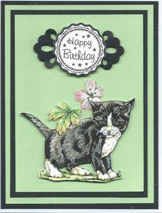 black & white kitten Happy Birthday