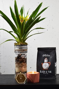 Fast Flowers, Fired Earth, Thing 1, Black Coffee, Flower Delivery, Scented Candles, Glass, Garden, Garten