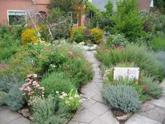 """apothecary garden- """"Among the most common apothecary plants are spearmint, echinacea, yarrow, lavender, sage, evening primrose, apothecary rose, white sage, peppermint and lemon balm. """""""