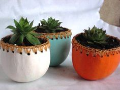Hens and Chicks plants in Stylish Gourd Planters
