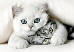2 jolis chats :-)