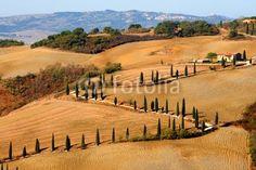 Kurvige Zypressenallee in der Toskana, La Foce, Italien S Kurve Herbst