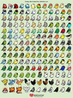 Chubby Bird Collection – birdhism Cute Kawaii Animals, Cute Animal Drawings Kawaii, Cute Little Drawings, Cute Little Animals, Funny Birds, Cute Birds, Bird Drawings, Easy Drawings, Cute Doodles