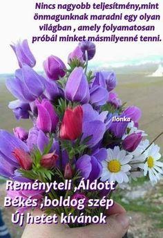 Winter Wonder, Good Morning, Christmas Holidays, Plants, Buen Dia, Christmas Vacation, Bonjour, Plant, Good Morning Wishes