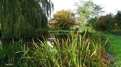 Nedereindseweg in Nieuwegein. Gem, Plants, Kunst, Jewels, Plant, Gemstone, Gemstones, Planets