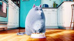 I got Eres Chloe.! ¿Qué personaje de 'La Vida Secreta de tus Mascotas' se parece más a ti?