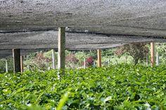 Sistemas matemáticos mejoran la toma de decisiones en el agro | Contexto Ganadero