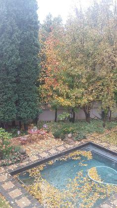 Autumn in our garden