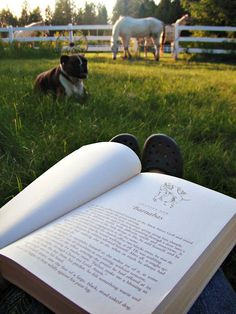 reading in the pasture- one of the best things you can do!