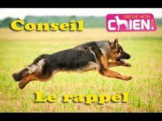 Dressage chien au rappel : Astuce pour faire revenir un chien vers son maître