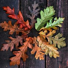 crisp-season: Autumn leaves~haunted trees