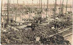 """ The Sponge Fleet "" Tarpon Springs, Florida. Karodens Vintage Post Cards."