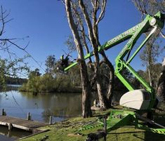Arborist Tree Lopping Firm servicing the Riverina & Murray For Sale Selling A Business, Sell Your Business, Tree Lopping, Tree Removal Service, Elizabeth Street, Surry Hills, Tree Care, Removal Services, Capital City