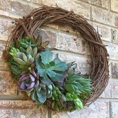 12 Succulent Wreath made to order