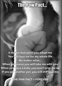 yes... don't adopt or buy an animal if you don't plan on loving and caring for it for it's whole life