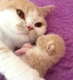 Mommy kitty with her precious little baby Puppies And Kitties, Baby Kittens, Cute Cats And Kittens, I Love Cats, Crazy Cats, Kittens Cutest, Beautiful Cats, Animals Beautiful, Cute Funny Animals