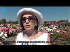 Eutopia Rose Celebration, 7th edition & Future Plans