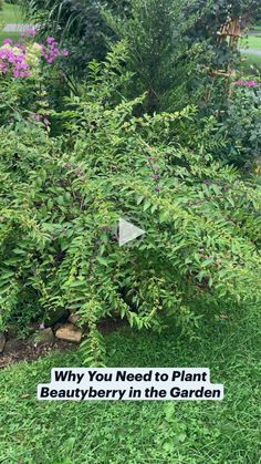 Small Backyard Design, Small Backyard Landscaping, Backyard Ideas, Landscaping Ideas, Cottage In The Woods, Garden Oasis, House Landscape, Interior Garden, Cool Plants